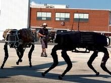 собаки-роботы BigDog