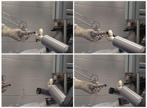 Мозг обезьян управляет роботизированной рукой