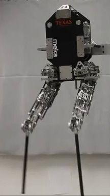 Ходящий двуногий робот Hum