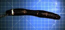 Робот-червяк Meshworm
