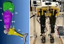 Робот с человеческой походкой