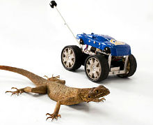 робот Tailbot